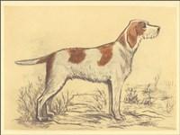 Hunting Dogs-Griffon Fine Art Print