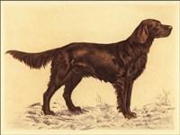 Hunting Dogs-Setter Fine Art Print