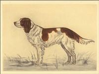 Hunting Dogs-Spaniel Fine Art Print