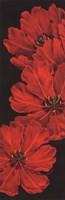 "Bella Grande Tulips by Paul Brent - 12"" x 36"""
