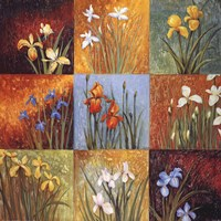 Iris Fields I Fine Art Print