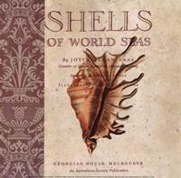"Shells Of The World by Paula Scaletta - 8"" x 8"""