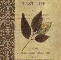 "Botany Principles II by Paula Scaletta - 8"" x 8"""
