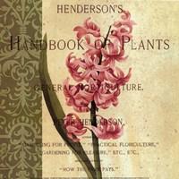 """Hyacinth by Paula Scaletta - 8"""" x 8"""""""