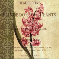 Hyacinth Fine Art Print