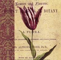 "Tulip by Paula Scaletta - 8"" x 8"""