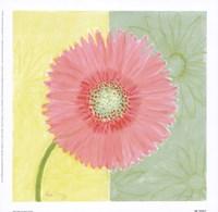 Pink Daisy Fine Art Print