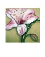 Astralmeria Fine Art Print