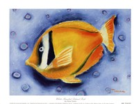 White Banded Island Fish Fine Art Print