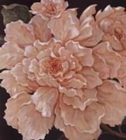 Ivory Peonies Fine Art Print
