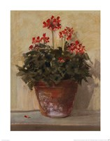 Potted Geraniums I Fine Art Print