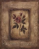 Savin Rose Fine Art Print