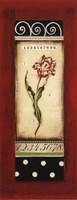 Belgian Tulip I - Petite Fine Art Print