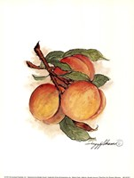 """6"""" x 8"""" Peaches"""