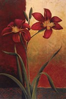 Casablanca Tapistry II Fine Art Print