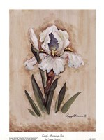 "Early Morning Iris by Peggy Abrams - 6"" x 8"""