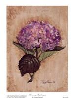 Blooming Hydrangea Fine Art Print