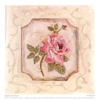 Rose In Season ll Framed Print