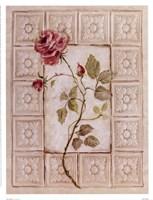 "Rosa Antigua ll by Peggy Abrams - 13"" x 17"""