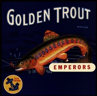 Golden Trout Fine Art Print