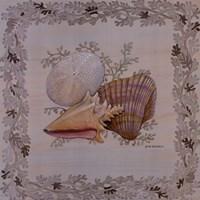 Pastel Shell I Framed Print