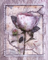 Love Letter Peonies Fine Art Print