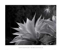 Flora Exotica X Fine Art Print