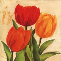Red, Orange, Yellow Tulips Framed Print