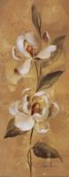 "Sunkissed Flowers IV by Silvia Vassileva - 8"" x 20"", FulcrumGallery.com brand"
