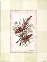 "Sierra Pine ll by Peggy Abrams - 6"" x 8"""