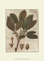 Leaves III Fine Art Print