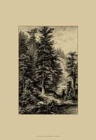 Noble Fir Fine Art Print