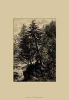 Larch Tree Fine Art Print