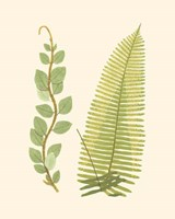Woodland Ferns VI Fine Art Print