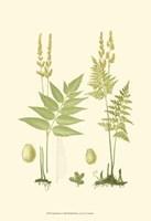 Spring Ferns I Fine Art Print