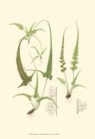 Spring Ferns II Fine Art Print