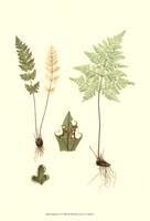 Spring Ferns IV Fine Art Print