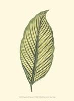 "Tropical Leaf Collection I by Jillian Jeffrey - 10"" x 13"", FulcrumGallery.com brand"