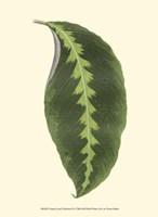 "Tropical Leaf Collection II by Jillian Jeffrey - 10"" x 13"", FulcrumGallery.com brand"