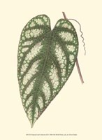 "Tropical Leaf Collection III by Jillian Jeffrey - 10"" x 13"", FulcrumGallery.com brand"
