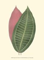 "Tropical Leaf Collection IV by Jillian Jeffrey - 10"" x 13"", FulcrumGallery.com brand"