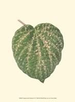 "Tropical Leaf Collection VI by Jillian Jeffrey - 10"" x 13"", FulcrumGallery.com brand"