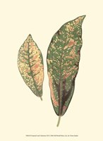 """Tropical Leaf Collection VII by Jillian Jeffrey - 10"""" x 13"""", FulcrumGallery.com brand"""