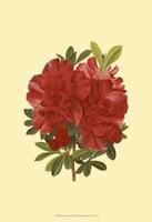 Blooming Azalea I Fine Art Print