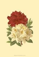 """Blooming Azalea II by Jillian Jeffrey - 13"""" x 19"""", FulcrumGallery.com brand"""