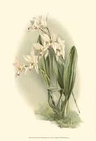Orchid Garden III Fine Art Print