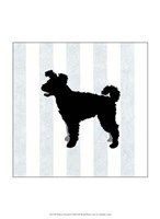 Pumi In Neutral Fine Art Print