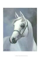 Palomino Fine Art Print