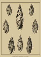 Shells On Khaki IV Fine Art Print