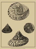 Shells On Khaki VIII Fine Art Print